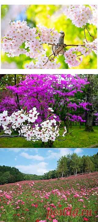 Tita Carré - Agulha e Tricot : Wallpapers de Flores maravilhosas (Тита Карре - Игла и Трикотаж: Обои Замечательные цветы)