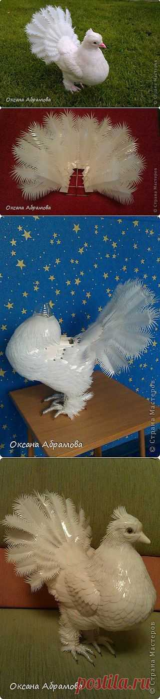 PIGEON (Royal, pavlinokhvosty) from plastic bottles | the Country of Masters