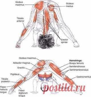 Упражнения на растягивание полезны всем, независимо от степени спортивной подготовки и возраста. Они помогают создать пластичную и грациозную фигуру, защитить суставы от возможных травм, а также улучшают осанку, повышают самооценку и уверенность в себе.  Итак, что же конкретно дают занятия стретчингом:   Стимулируется кровоток и циркуляция лимфы в организме. Показать полностью…
