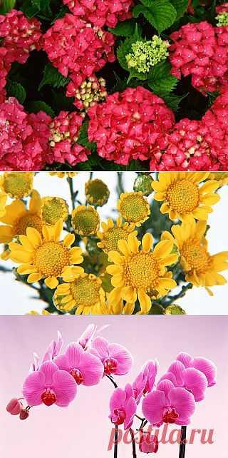 Tita Carré - Agulha e Tricot : Wallpapers de Flores maravilhosas 2