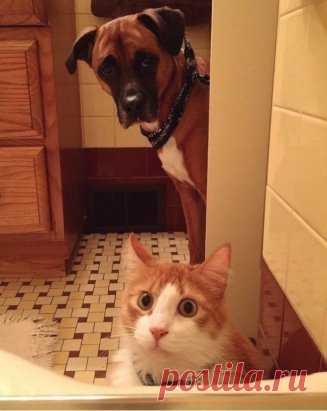 Если у тебя есть питомцы, принять ванну в одиночестве тебе не удастся.