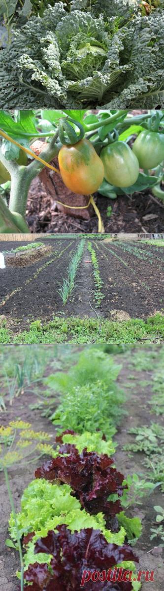 Мой ленивый огород — Кладовочка