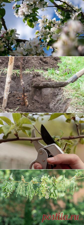 7 важных пунктов грамотного ухода за плодовыми деревьями Если вы решили посвятить себя выращиванию плодовых деревьев, то на первом этапе у вас возникнет много вопросов по поводу того, когда сажать, обрезать ли ветки, как готовить деревья на зиму, чем удобрять. Все ответы на эти вопросы вы найдете в этой статье. Уход за плодовыми деревьями. Иллюстрация для статьи используется по стандартной лицензии ©life-hacky.ru 1. […] Читай дальше на сайте. Жми подробнее ➡