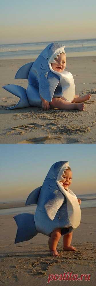 Акуленыш