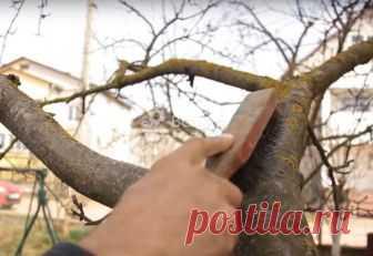Уход за деревьями в саду: болезни, лечение, защита Как ухаживать за деревьями в саду. Что такое морозобоины, как их лечить, чем обработать дерево от морозобоин. Как лечить дупло, болезни коры деревьев