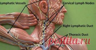Очистите токсины из организма: 11 способов детоксикации вашей лимфатической системы    Это важно!            Лимфатическая системапредставляет собой систему, состоящую из лимфатических узлов, желез, селезенки, вилочковой железы и миндалин. Она переносит клеточные сточные воды орга…