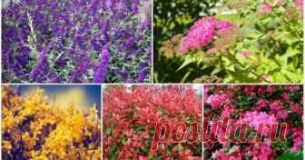 8 кустарников, которые преобразят ваш сад за самое короткое время Вы недавно приобрели пустой участок и не знаете, чем украсить сад? Посадите декоративные кустарники, которые быстро разрастаются и зацветают уже в раннем возрасте.
