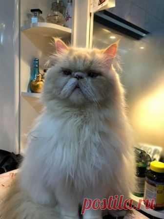 (27) Eu amo meu Gato! [Grupo da #WhatsAppdoGato]