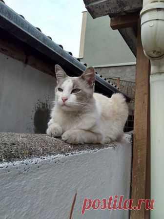 (28) Tudo Sobre Gatos - Felinos