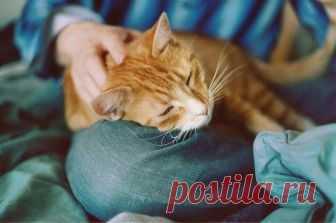 А Вы знаете почему кошка ложится на больное место человека? | Всегда в форме!