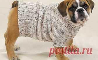 вязаная одежда для собаки своими руками инструкция советы и фото