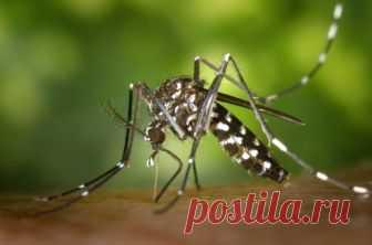 Закусали комары? Чудодейственные способы борьбы с кровожадными насекомыми