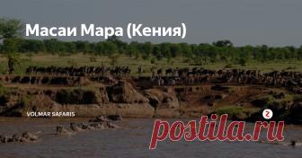 Масаи Мара (Кения) Масаи Мара – самый популярный и посещаемый национальный парк Кении, площадью 1672 кв.км (северная часть равнины Серенгети). Юго-западная часть Кенииисконная земля древнего племени Масаи, и поэтому парк, лежащий на этой земле, носит одноименное название. Но главное отличие Масаи Мара от других парков Кении– это ежегодная миграция животных – «Великий спектакль природы». Во время невероятных масшта