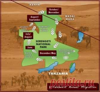 ЕЖЕГОДНАЯ МИГРАЦИЯ ЖИВОТНЫХ В ТАНЗАНИЮ: | Volmar Safaris | Яндекс Дзен