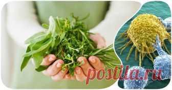 Целебные травы против рака: как сдержать рост раковых клеток силами природы Перечисленные травы показали очень мощный противораковый потенциал!
