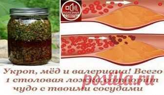 Укроп, мед, валериана - и сосуды без изъяна!  Вас беспокоят захламленные бляшками сосуды, поэтому их-то надо почистить в первую очередь.  Для этого приготовить вот такой настой: 1 стакан укропного семени, 2 ст. ложки молотого корня валерианы сме…