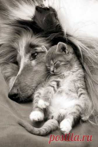 Meowy rest on Woofy after pampering her ... so endearing this pair... Yes Meowy hug fill with warm and cares woofy sleep soundly then with his arm.