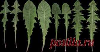 Всего один листик этой травы, которая есть в любом саду, может спасти вашу жизнь за минуту. Но только некоторые люди знают, как использовать его! Когда мы говорим о лейкемии, то все мы думаем в первую очередь...