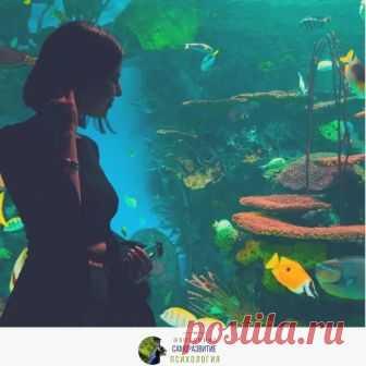 Вы когда-нибудь наблюдали за рыбками в грязном аквариуме? ~ * ~ * ~ * ~ * ~ ...