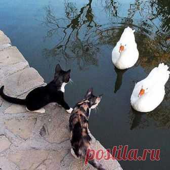 - Вы принесли рыбу? - Покажите сначала хлеб!