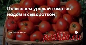 Повышаем урожай томатов йодом и сывороткой Если помидоры на вашем огороде плохо созревают, то причина в дефиците йода. Этот важный микроэлемент отвечает за дозревание плодов, обеспечивает защиту от бактериальных инфекций, помогает увеличить количество завязей.