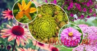8 растений, которые невозможно убить Цветоводы часто сталкиваются с такими проблемами, как отсутствие цветения у растений, их гибель от засухи или заморозков. Но с этими культурами такого не случится. Поэтому высаживайте их скорее.