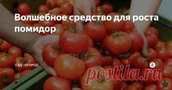 Волшебное средство для роста помидор Рецепт: бочку на 1/3 заполняем крапивой, добавляем ведро удобрения коровяк, 2 лопаты золы, 2 килограмма дрожжей, 3 литра сыворотки. Даем настояться 2 недели и после поливаем томаты под корень. Эффект не заставит себя долго ждать.