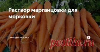Раствор марганцовки для морковки Хотите вырастить здоровую морковь без гнили, болезней и повреждений вредителями? Тогда воспользуйтесь вот этим простым советом. После второго прореживания обязательно полейте грядку с морковкой раствором марганцовки. На ведро в 10 литров потребуется всего 3 грамма марганца и 2 – 3 грамма борной кислоты. Одним ведром можно обработать площадь посевов в 3 – 4 квадратных метра.