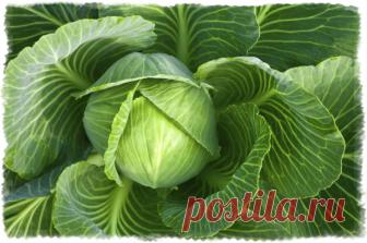 Самый полезный овощ для человека. Рейтинг | О, да - еда! | Яндекс Дзен