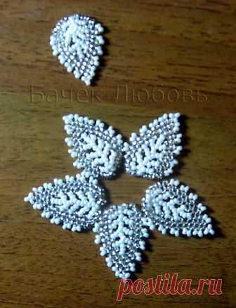 Leaf from Tatiana Van Iten