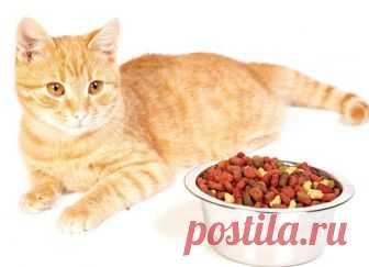 Чем кормить стерилизованную кошку? Если вы решились на стерилизацию своей кошки, то ещё до операции выясните, как правильно кормить любимицу, ведь питание должно быть особым. Почему нужно изменить рацион стерилизованной кошки?...