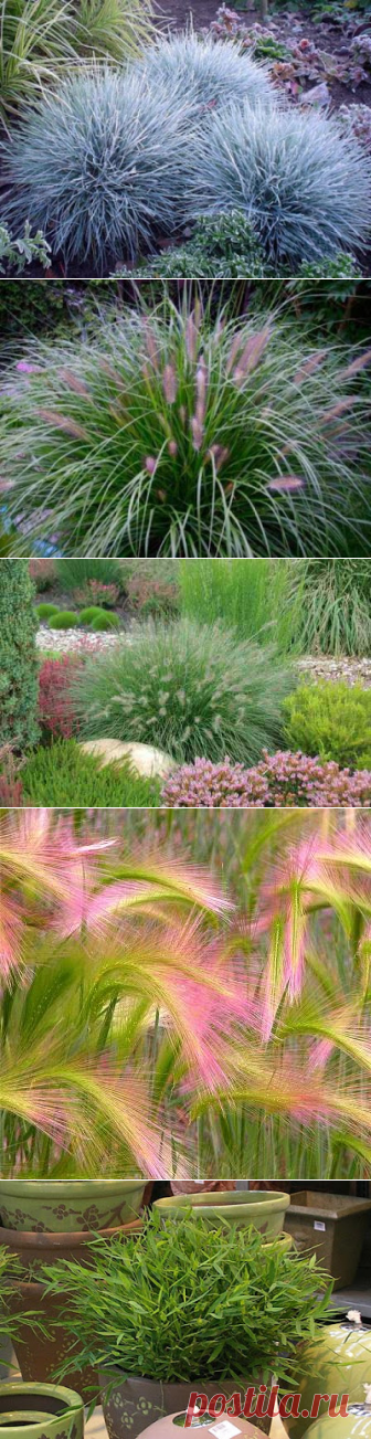 Мастера и умники: Какие декоративные травы посадить на дачном участке