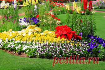 Красивоцветущие многолетники для сада: фото, описание, виды