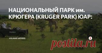 НАЦИОНАЛЬНЫЙ ПАРК им. КРЮГЕРА (KRUGER PARK) ЮАР: На территории ЮАР находится множествоприродных заповедников, и национальных парков самый крупный из которых - Национальный заповедник им. Крюгера, или Крюгер Парк (Kruger Park). Он расположен в северо-восточной части ЮАР, меньше чем в часе полета от Йоханнесбурга, этот огромный заповедник протянулся на много миль вдоль границы с Мозамбиком. На его территории обитает множество диких животных, в то