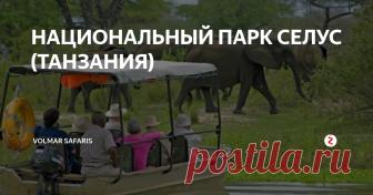 НАЦИОНАЛЬНЫЙ ПАРК СЕЛУС (ТАНЗАНИЯ) Самая большая охраняемая дикая территория в Африке с самой многочисленной популяцией слонов в Танзании. Ещё здесь часто встречаются львы, импалы, жирафы, антилопы, бабуины, зебры, буйволы, бегемоты и дикие собаки. Природа в резервате очень разнообразна: от саванн до лесов, от лугов до скал, прорезанных рекой Руфижи и её притоками Киламберо и Лувегу. В реке Киломберо водятся хищные тигровые рыбы и