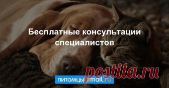 Консультация ветеринара и кинолога, собаки и кошки