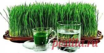 Проростки пшеницы - чрезвычайно полезны!  Проростки пшеницы чрезвычайно полезны доя организма человека. Они улучшают работу пищеварительного тракта, ускоряют обменные процессы, нормализуют состав крови, укрепляют иммунитет. В пшеничных проростках уйма витаминов. Они полезны детям, подросткам, людям пожилого возраста, а также тем, кто занимается тяжелой физической работой.  Проростки оздоровляют и очищают печень, почки, мочевой пузырь, избавляют от отеков, улучшают состояни...
