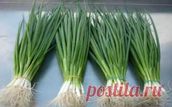 Я больше не покупаю зеленый лук. Два необычных способа вырастить зеленые перья без использования земли