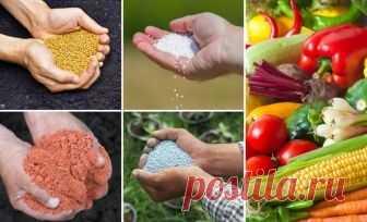 Минеральные удобрения – что это такое и как их правильно вносить | Удобрения и стимуляторы (Огород.ru)