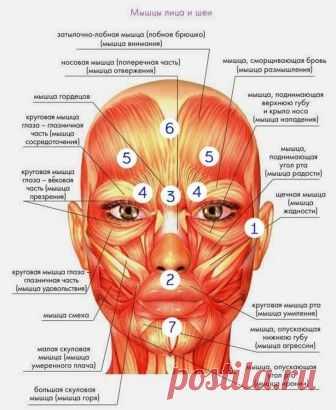 Вьетнамский рецепт молодости Это оздоровление организма древневьетнамским методом с помощью точек, которые находятся у нас на лице. Среди множества точек, расположенных на нашем лице, есть так называемые точки красоты, воздейству...