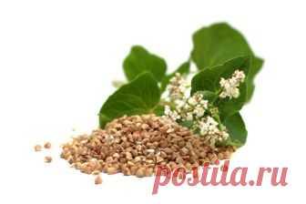 Las propiedades útiles grechki y la contraindicación