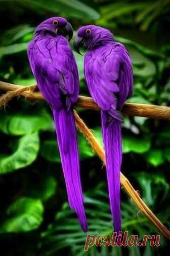 Природа - лучший творец!