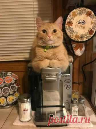 - You wish some coffee with cream or without?\u000a- With cream.\u000a- I already everything ate cream.\u000a- Then without.\u000a- Excellent choice, sir.