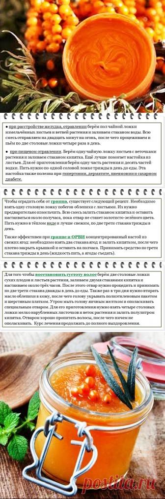Sea-buckthorn: advantage and harm, medicinal properties and contraindications