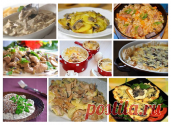 Вкусные блюда из грибов: 10 рецептов