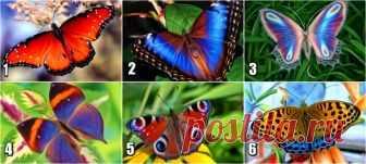 Тест: Выбранная Вами бабочка расскажет какие чувства Вы скрываете | Секрет | Яндекс Дзен