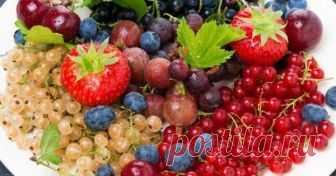 Какие вкусности из ягод можно заготовить на зиму Как приятно зимой открыть баночку душистого варенья и вдохнуть терпкий аромат лета! А чтобы было что открывать, сначала нужно что-то положить в баночки. Посмотрите подборку необычных рецептов из ягод, которые можно повторить самостоятельно.