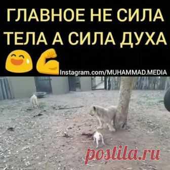 Видео на Facebook - Людмила Коваленко
