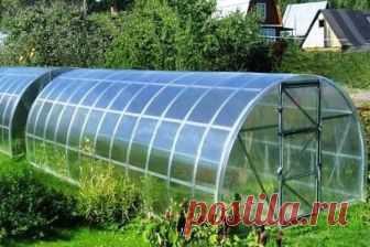 Выращивание в одной теплице перца и помидорами | Вырасти сад!
