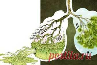 Напиток для очищения лёгких | Polza-vred.su